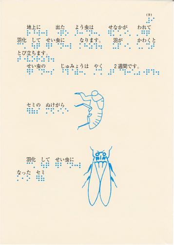 196-9.jpg