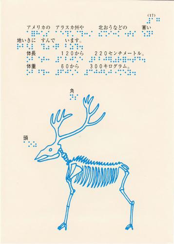 204-17.jpg