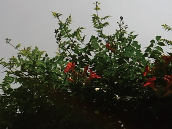 170621-4.jpg